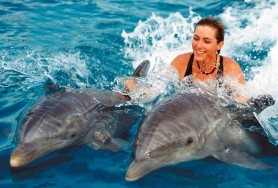 Swim With Dolphins in Cuba